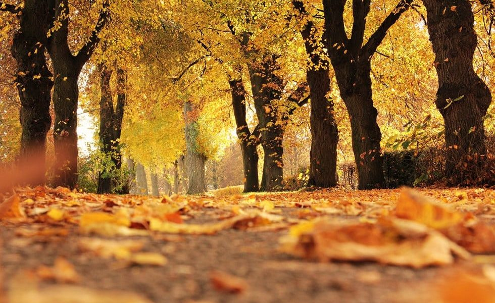 Why The Fall Is An Excellent Time To Install Central Air