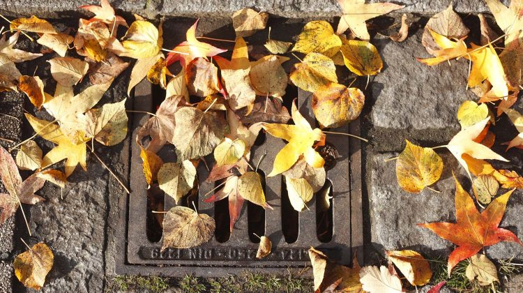 Blocked Drainage If you notice that your plumbing has been giving you problems lately, check your yards. Those beautiful orange leaves can be the biggest culprits here. This is primarily because a lot of leaves fall and accumulate in one location during the season. They can easily be blown into your drainage system and block […]