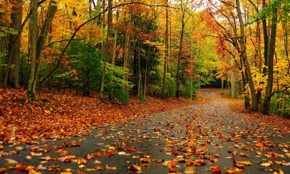 How To Improve Your HVAC System This Fall
