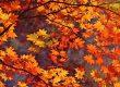 How The Fall Season Can Hurt Your Plumbing